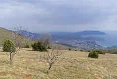 Un arbre d'amande de floraison sur une montagne Image stock