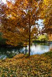 Un arbre d'automne par un étang Photos libres de droits