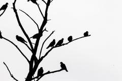Un arbre d'isolement Photographie stock