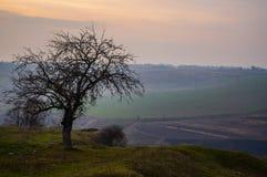 Un arbre d'isolement au coucher du soleil image libre de droits