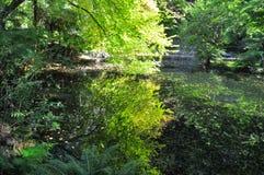 Un arbre d'orme et de ginkgo se reflètent dans un étang d'automne Image stock