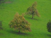 Un arbre dans la campagne Photo libre de droits