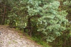 Un arbre dans la forêt Photographie stock