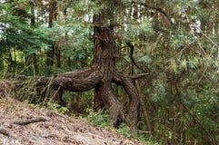 Un arbre dans la forêt image stock