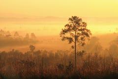 Un arbre dans le brouillard et la lumière du soleil de matin Images libres de droits