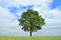 Un arbre dans le domaine Photo libre de droits