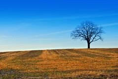 Un arbre dans le domaine de ferme Photos stock