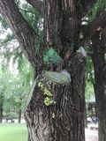 Un arbre dans un arbre Images stock