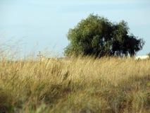 Un arbre dans un domaine Images libres de droits