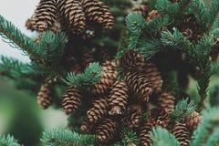 Un arbre de c?ne de pin illustration de vecteur