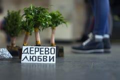 Un arbre de l'amour dans un pot, pour être sur le plancher d'un souterrain devant passer des personnes Images stock