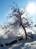 Un arbre de l'hiver Images libres de droits