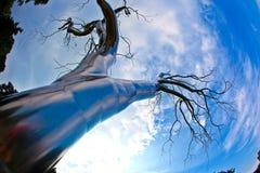 Un arbre de métal dans le ressortissant Photos libres de droits