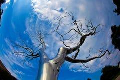 Un arbre de métal dans le ressortissant Photo stock
