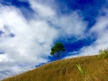 Un arbre de pin ose être différent de toute la végétation qui des bordures il Photographie stock
