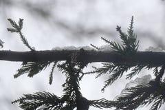 Un arbre de pin ose être différent de toute la végétation qui des bordures il image stock