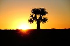 Un arbre de tremblement au coucher du soleil dans la province Afrique du Sud de Namaqualand le Cap-du-Nord photographie stock