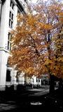 Un arbre en automne Images libres de droits