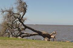 Un arbre en baisse Photographie stock libre de droits