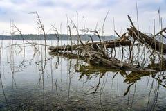 un arbre en Bavière Allemagne d'Ostersee de lac Photos stock