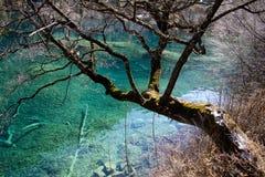Un arbre en vallée de Jiuzhai Photographie stock libre de droits