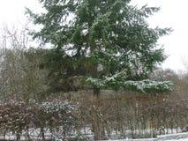 Un arbre et des arbustes environnants couverts en hiver neigent photo stock