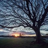 Un arbre et feuilles tombées sur l'herbe Photographie stock