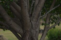 Un arbre et la totalité branches du ` s Images stock