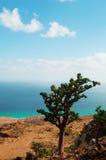 Un arbre fleurissant de bouteille sur le chemin à la caverne de Hoq, île de Socotra, Yémen Images stock