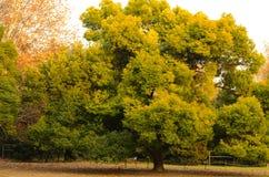 Un arbre inégalé dans la lueur de coucher du soleil photographie stock