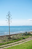 Un arbre isolé à la plage Photographie stock