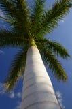 Un arbre isolé Photos libres de droits