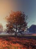 Un arbre isolé Photos stock