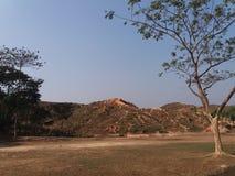Un arbre isolé Photographie stock