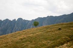 Un arbre isolé dans la colline Images stock
