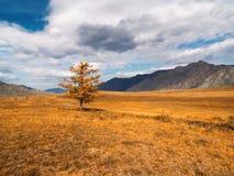 Un arbre isolé dans la vallée Photo libre de droits