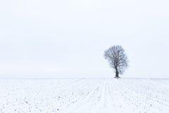 Un arbre isolé en hiver sur un champ avec la neige Photos libres de droits