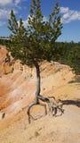 Un arbre isolé jugeant fort en Bryce Canyon photographie stock libre de droits
