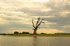 Un arbre isolé mort accompagné de trois adolescents Images stock