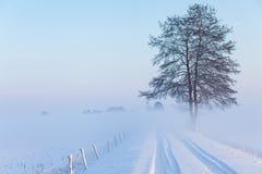 Un arbre isolé se tenant à côté de la route entre les champs couverts Photos libres de droits