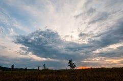 Un arbre isolé sur une roche sous un ciel nuageux lourd photographie stock libre de droits