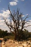 Un arbre l'atteint des branches du ` s vers le ciel Image libre de droits