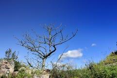 Un arbre mort Image stock