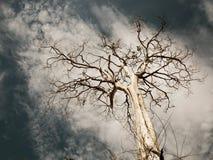 Un arbre mort Photographie stock