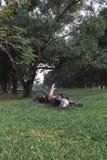 Un arbre mort cassé tombé photographie stock