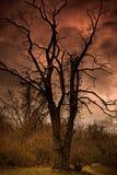 Un arbre mort dans l'enfer Image stock