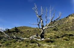 Un arbre mort dans la visibilité directe Glaciares NP Photo stock