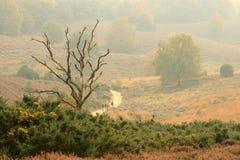 Un arbre mort isolé en automne Images libres de droits