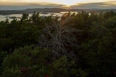 Un arbre mort solitaire parmi la vie photographie stock
