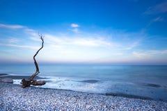 Un arbre mort sur un Pebble Beach, avec un ciel et une mer bleue Image stock